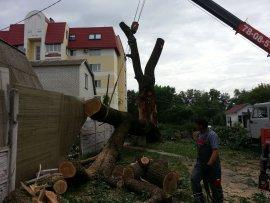 В Брянске огромный дуб рухнул на жилой дом