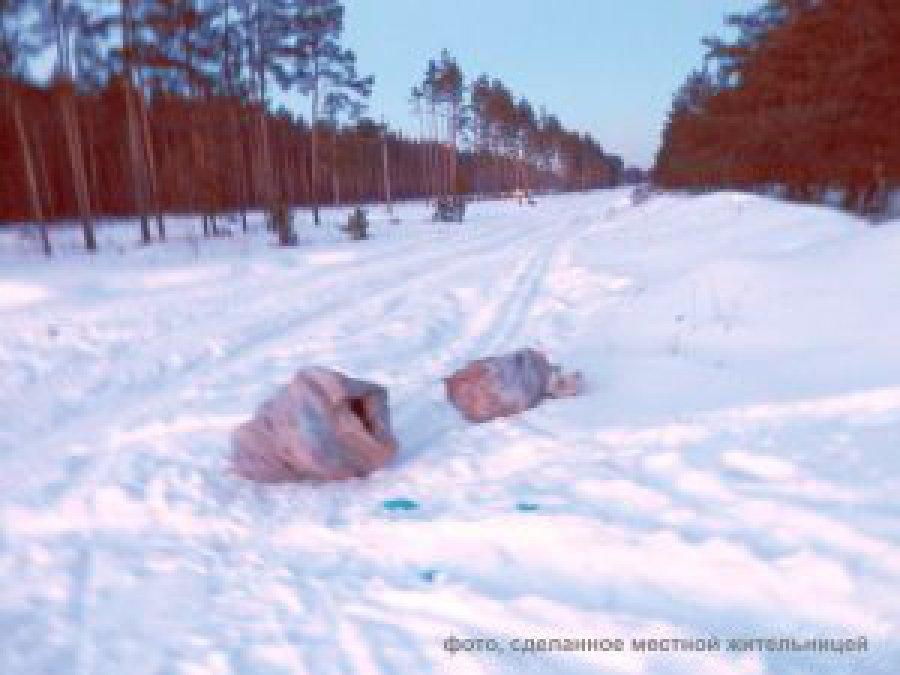 В отысканных наокраине Брянска мешках стелами животных оказались останки лис