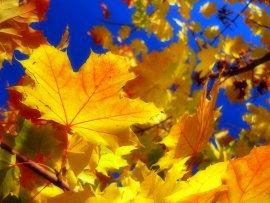 В Брянск ненадолго пришла осень