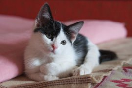 Для брянского кота-инвалида нашли хозяев в Германии
