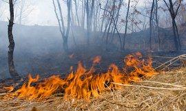 С начала мая на Брянщине произошло 3 лесных пожара