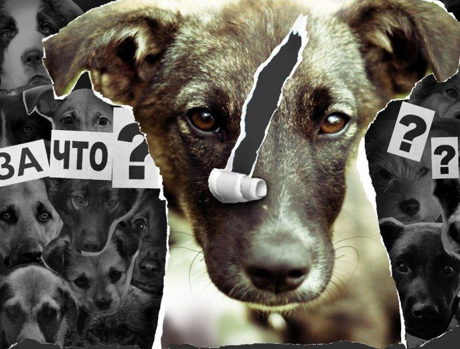 Жительница Брянска отыскала два мешка соскальпированными трупами собак