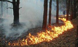 В Суземском районе горит лес