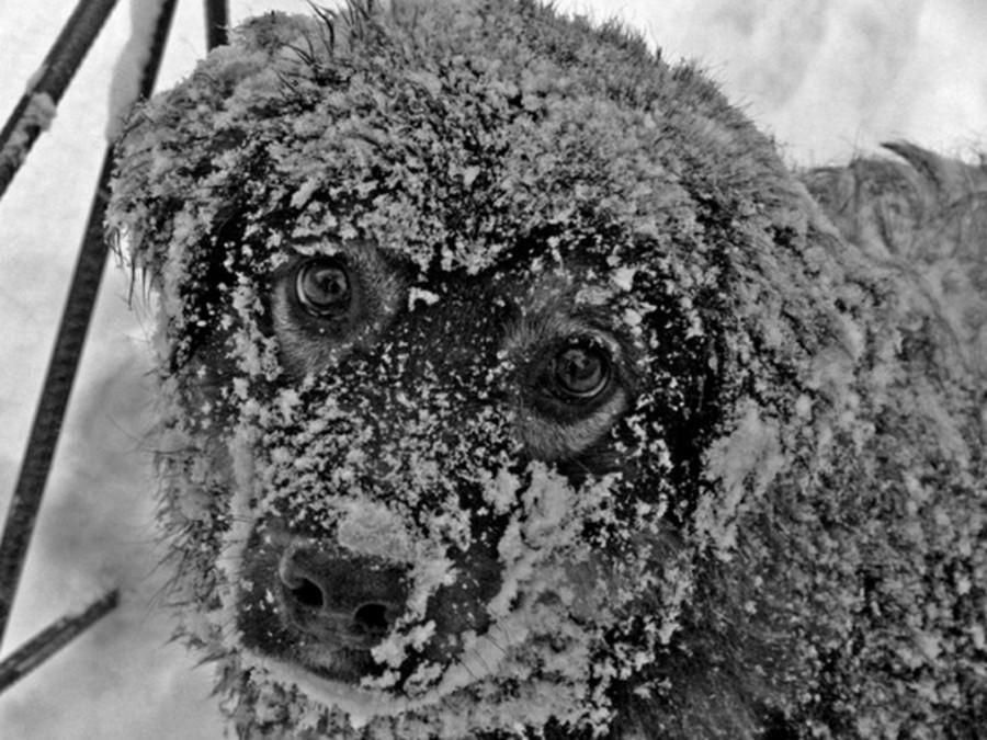 В Брянске в соцсетях сообщили о травле собак крысиным ядом