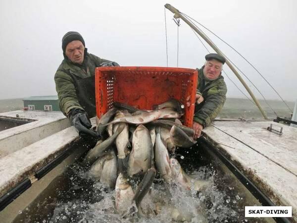 В Брянске в Керамзитное озеро выпустили тонну белого амура и толстолобика