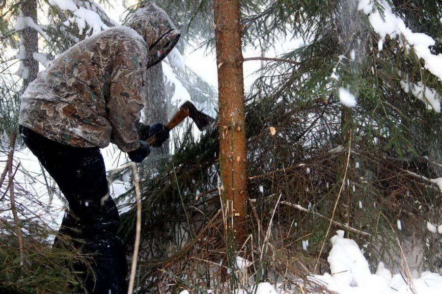 Под Брянском мужчина незаконно вырубил деревья на 800 тысяч рублей