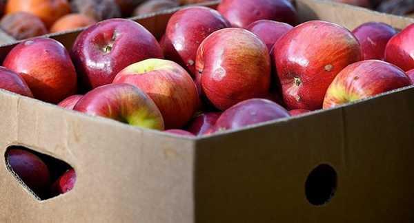 Через Брянщину не пустили яблоки с коричнево-мраморным клопом