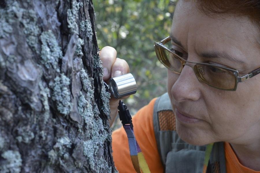 В Брянской области ученые нашли новые виды грибов и лишайников