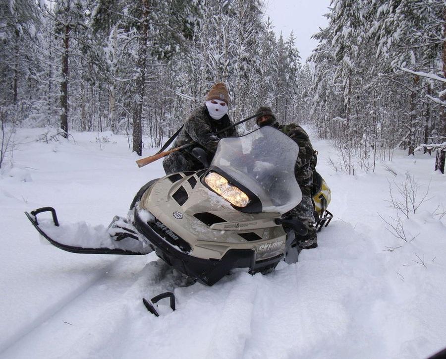 В Севске браконьеры на снегоходе убили 11 лис и косулю