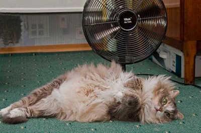 кошке жарко