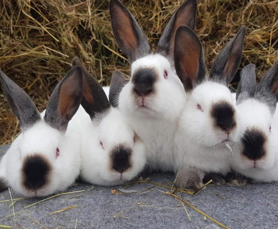 Под Брянском откроется крупный кролиководческий комплекс «Кролково»