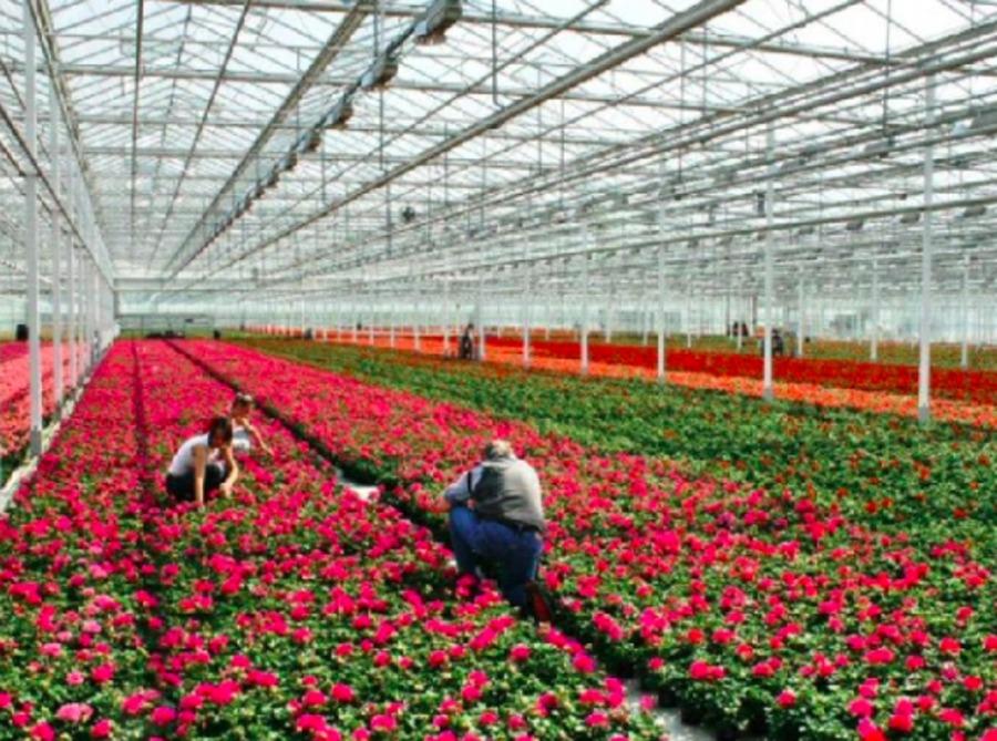 В Брянской области обещают цветочное импортозамещение