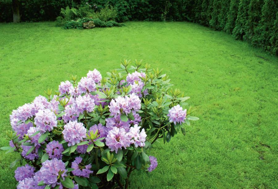 Особенности озеленения парков при помощи гидропосева газона