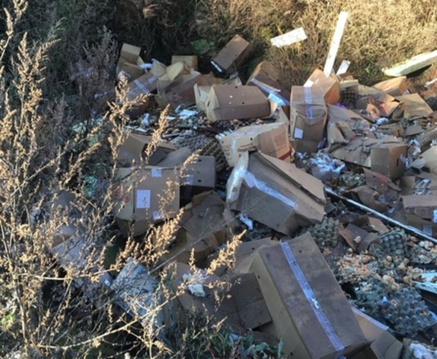 Брянских чиновников заставят убрать свалку тухлых яиц у озера Орлик