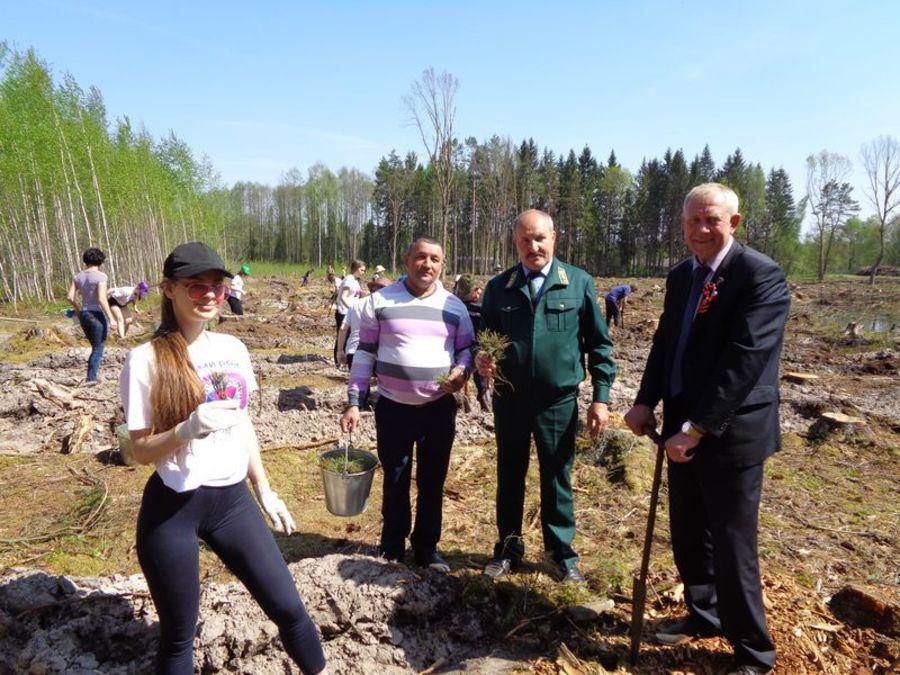 Брянщина присоединится к Всероссийскому дню посадки леса