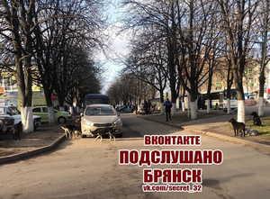 В Брянске заметили стаю злобных бродячих собак возле школы №51