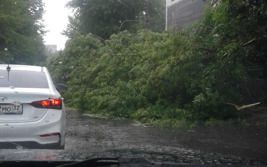 В Брянске на Советской улице на дорогу рухнуло дерево