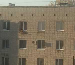 Брянцев развеселил загорающий в окне пятиэтажки мужчина