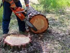 В Брянской области сократилась незаконная рубка древесины