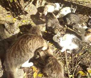 Под Брянском в санатории «Синезерки» спасают от голодной смерти 10 кошек