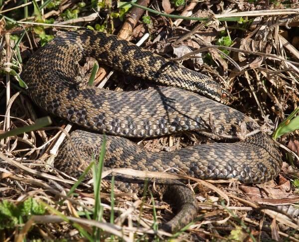 без змеи в брянской области фото было удивительно насколько