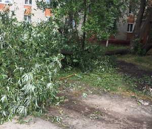 В Брянске от порыва ветра рухнуло дерево на улице Володарского