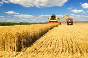 Брянская область вошла в топ-5 по урожайности