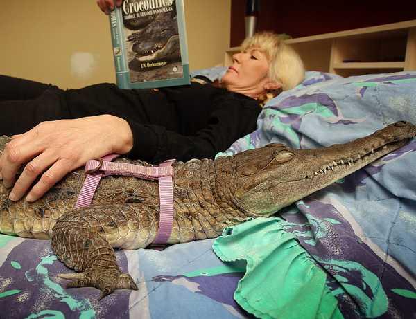 Брянцам запретили держать дома крокодилов, тигров и пауков