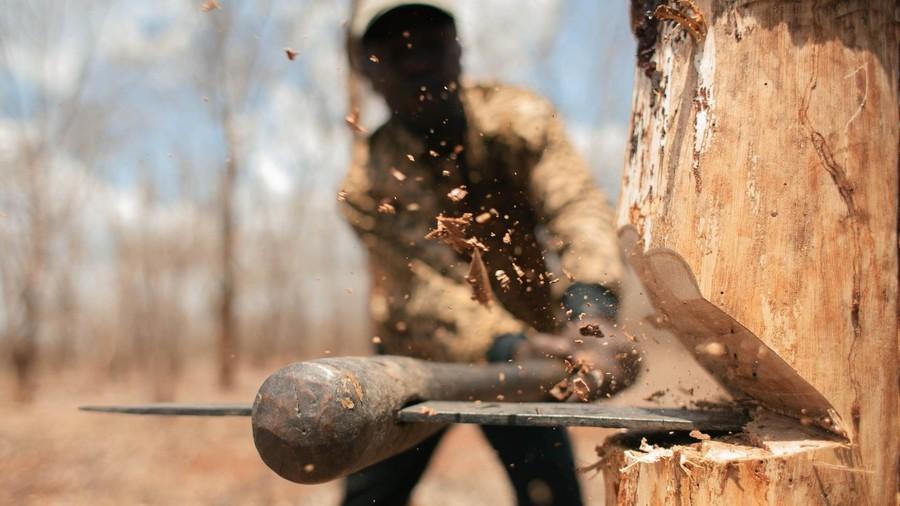 В жирятинском лесничестве неизвестный вырубил дуб