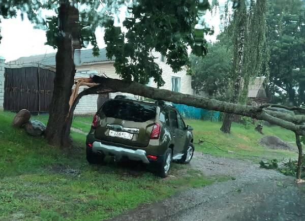 Под Новозыбковом сняли на фото авто счастливчика, на которое рухнуло дерево