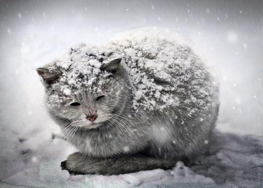 Брянцам 26 октября обещают мороз и дождь со снегом