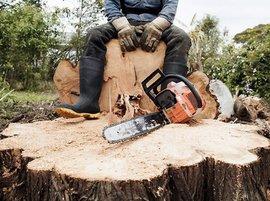 Жителю Выгоничей за срубленный дуб грозит до 7 лет колонии