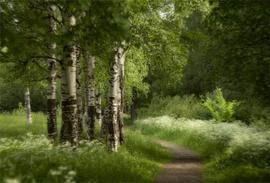 Брянщина заняла 2 место в ЦФО по эффективности использования лесов