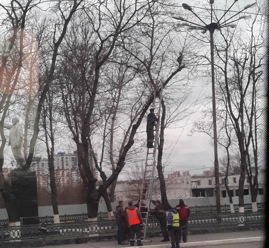 Брянские железнодорожники спасли забравшегося на дерево кота