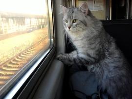 На Брянщине изменится расписание поездов