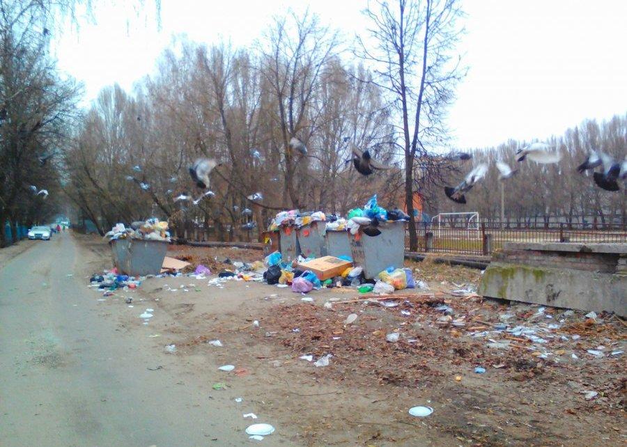 ВБрянске загоры мусора фирме «Сервис Плюс» грозит лишение лицензии