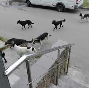 За кормление бездомных собак предложил штрафовать брянец