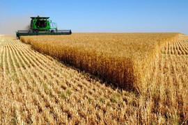 Экспорт пшеницы в Белоруссию из Брянской области вырос в 30 раз
