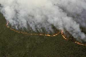 В МЧС назвали причину распространения лесных пожаров в Сибири
