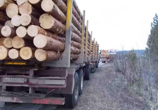 В Брянской области в ходе операции «лес» возбудили 7 уголовных дел