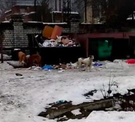В Брянске стая из 26 собак захватила двор многоквартирного дома